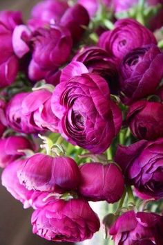 Ranunculus Ideas - Buttercups generally bloom in the spring, yet blossoms may be discovered throughout the summer season, especially where the plants are broadening as opportunistic colonizers, as when it comes to yard weeds My Flower, Pretty Flowers, Purple Flowers, Beautiful Roses, Beautiful Gardens, Bouquets, Planting Flowers, Floral Arrangements, Wedding Flowers