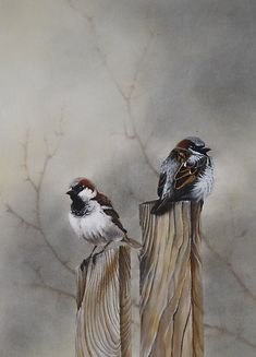 Reminds me of the sweet Eastern Oregon sparrows. sweet..