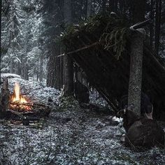 277 Likes, 0 Comments - Camping Camping Survival, Survival Gear, Bushcraft, Outdoor Camping, Beautiful Day, Environment, Outdoors, Snow, Plants