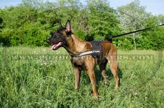 Purchase Nylon Dog Harness with reflective strap for pulling tracking training and sar! The harness is lightweight and has non-restrictive design. Dog Training Equipment, Leash Training, Dog Harness, Dog Leash, Dog Muzzle, Belgian Malinois, Search And Rescue, Service Dogs, Working Dogs