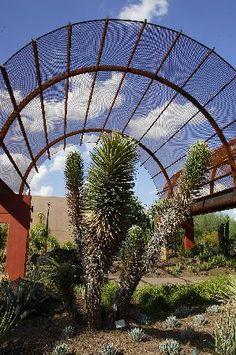 Desert Botanical Garden Succulent Gallery