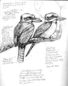 Australia Sketchbook – Drawing The Motmot Bird Drawings, Animal Drawings, Pencil Drawings, Animal Sketches, Drawing Sketches, Drawing Ideas, Sketching, Bird Sketch, Nature Sketch