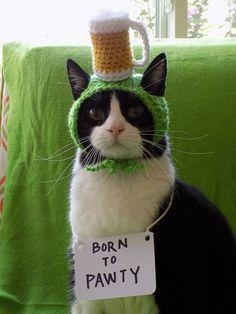 Beer Hat for Cat - CROCHET