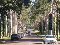Drive into Kings Park Perth Australia, Western Australia, Kings Park Perth, Places Ive Been, Places To Go, Beautiful Places, Amazing Places, The Good Place, Travel Destinations