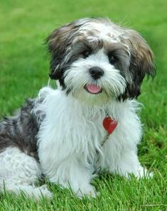 """Click visit site and Check out Best """"dogs"""" T-Shirts & Hoodies. This website is superb.  Tip: You can search """"your last name"""" or """"your favorite shirts"""" at search bar on the top.  #dogs"""