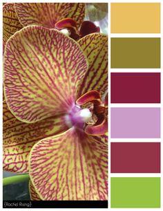 Purple and Yellow Color Scheme #colorscheme