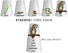 Stacked food chain from we are teachers Science Resources, Science Lessons, Science Education, Teaching Science, Science For Kids, Science Activities, Science Projects, Life Science, Biology Projects