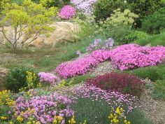 rock garden tips and plants, flowers, gardening, Rock Gardens can be very colourful especially in the spring Elysium Gardens