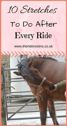 The most important role of equestrian clothing is for security Although horses can be trained they can be unforeseeable when provoked. Riders are susceptible while riding and handling horses, espec… Horseback Riding Tips, Horse Riding Tips, Riding Gear, Dressage, Reining Horses, Horse Exercises, Horse Care Tips, Equestrian Outfits, Equestrian Fashion