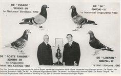 Racing pigeons for sale, pigeon exports, loft reports and articles. Anton Van, Homing Pigeons, Pigeon Breeds, Palomar, Vermont, Black Diamond, Animals And Pets, Racing, Birds