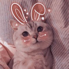 Cute Baby Cats, Cute Cats And Kittens, Cute Baby Animals, Kittens Cutest, Cute Babies, Cute Doodle Art, Cute Doodles, Funy Animals, Cute Cat Memes