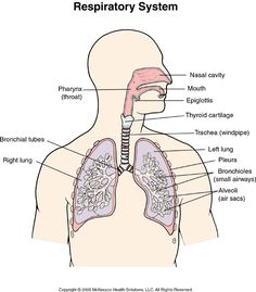 Science for Kids - Grade 5 Video Lesson - Human Respiratory System ...