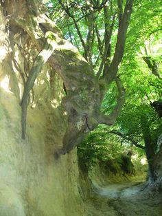 A Gorge in Kazimierz Dolny, Poland