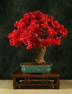 Red Bonsai