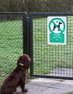 A dog with pet insurance knows his boundaries.