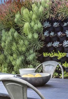 If you have limited outdoor space, don't assume that you're relegated to a few pot plants. A vertical garden may be the perfect solution. Living Green Wall, Living Walls, Vertical Plant Wall, Pots, Green Facade, Australian Garden, Raised Planter, Growing Succulents, Succulent Wall