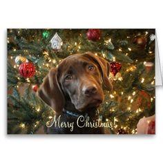 Chocolate Labrador Retriever Merry Christmas Card Puppy Holiday ...