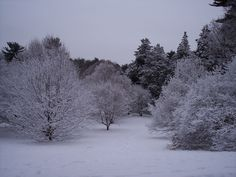 A snowy scene in the Arnold Arboretum in Jamaica Plain a few years back.  http://marcphotogallery.com/arboretum-snow.html