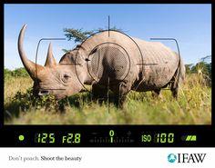IFAW: Anti-poaching, Rhino