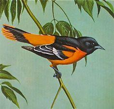 Birds, Print, Baltimore Oriole, Walter A Weber, Antique, Home Decor, Natural…