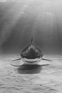 Monochrome shark attack