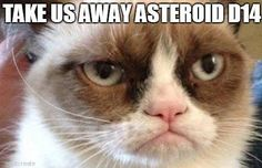 25 hilarious Grumpy Cat memes culled from the Internet. Grumpy Cat Images, Grumpy Cat Meme, Cat Memes, Grump Cat, Grumpy Kitty, Kitty Kitty, Knitting Quotes, Knitting Humor, Crochet Humor