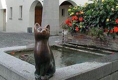 Кот, Штайн-на-Рейне, Швейцария.
