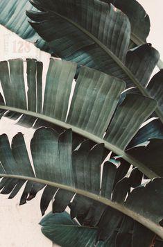 Photo by me Iphone Wallpaper Glitter, Green Wallpaper, Palm Wallpaper, Modern Art Prints, Wall Art Prints, Wall Collage, Plant Aesthetic, Sky Aesthetic, Green Plants