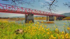 2015/03 /23 福岡県筑後川沿いの春景色です。Chikugo River, Fukuoka