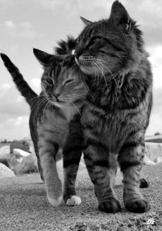 catbookblog:    There's nothing like the affection from a cat.