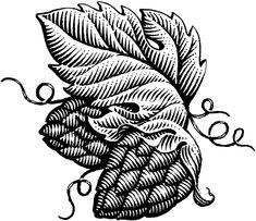 Scratchboard illustration by Michael Halbert Art And Illustration, Engraving Illustration, Ink Illustrations, Pattern Illustration, Botanical Illustration, Scratchboard, Line Drawing, Design Art, Art Drawings