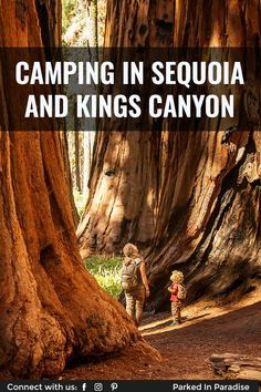 The best tent and RV camping sites in Kings Canyon and Sequoia National Park. Restrictions, pet policy, dump stations, how to find free camping nearby. Best Tents For Camping, Cool Tents, Tent Camping, Cold Springs Campground, Sunset Campground, Giant Sequoia National Monument, Giant Sequoia Trees, Rv Trip Planner, Best Places To Camp