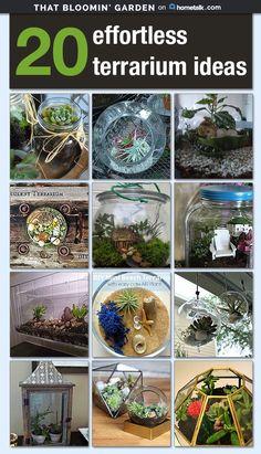 20 Effortless Terrarium Ideas