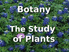 Apologia Botany