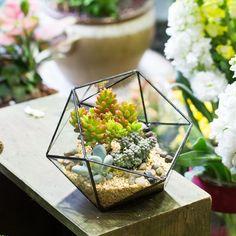Modern Geometric Triangular Half Ball Glass Geometric Terrarium Tabletop Succulent Fern Moss Box Planter Flower Pot Bonsai Flower Pot,Glass Terrarium planters