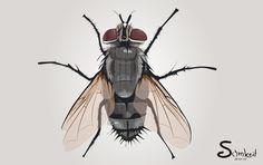 แมลงวันบัวปอก