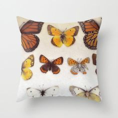 Butterfly Pillow Cover Photo Pillow Nature Photography by ellemoss, $36.00