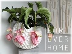 Vitrine Box Www Foreverhome Nl Decor Ideas Pinterest