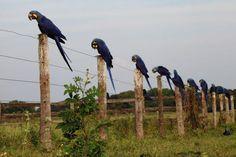 pantanal mato-grosso do sul
