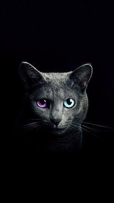 "Iphone kitty-cat ""Design studio"""