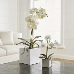 Our potted faux orchid plants grace a bathroom counter, bookshelf or coffee table with the plant's signature delicate blossoms and glossy green leaves. Potted in attractive white square planters, the orchids look as natural as the real thing. Indoor Orchids, Orchid Plants, Indoor Plants, Small Artificial Plants, Artificial Orchids, Plant Wall, Plant Decor, Orchid Arrangements, Square Planters