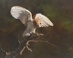 British Wildlife, Wildlife Art, Original Artwork, Original Paintings, Bird Paintings, Hunting Art, Amazing Paintings, Canvas Prints, Art Prints