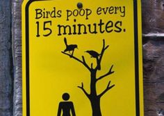 Bathroom Humor: Funny animal signs, bird warning...