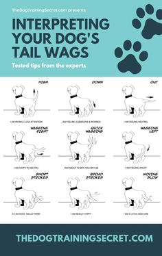 How To Read A Dog& Body Language To Learn .- Wie man die Körpersprache eines Hundes liest, um das Lernen zu verbessern – The… How To Read A Dog& Body Language To Improve Learning – TheDogTrainingSec … – Nala – - Background Grey, Dog Body Language, Reading Body Language, Easiest Dogs To Train, Dog Training Tips, Training Classes, Training Academy, Potty Training, Training Pads