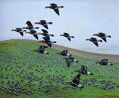 Robert Falcon Scott, The Wild Geese, Rare Birds, His Travel, Royal Navy, Wildlife Art, Conservation, Galleries, Artists