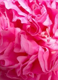 La vie en rose #PiagetRose @Piaget Huewe