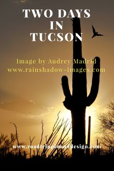 This is the perfect guide to see Tucson if you only have two days to spend there. Find out where to stay, where to eat, what to see including Saguaros and Wildlife. #travel #familytravel #tucson #quicktrips #saguaros #wildlife#visittucson