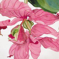 At Lyndsey Ingram Gallery, London. Botanical Drawings, Botanical Art, Botanical Illustration, Illustration Art, Art Illustrations, Sarah Graham Artist, Big Wall Art, Artist Sketchbook, Art For Art Sake