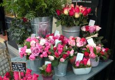 S tímto trikem vám zakoření každá kupovaná růže z květinářství. Budou vám růst několik měsíců - Strana 2 z 2 - Příroda je lék