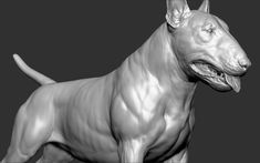 ArtStation - Dog Bull Terrier, Dmitrii Prosov Animal Skull Tattoos, Animal Skulls, Dog Anatomy, Animal Anatomy, English Bull Terriers, Zbrush, Panther, Sculpting, Pitbulls